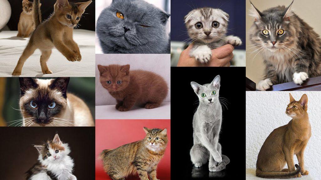 поздравления женщины окрас кошек с фотографиями и названиями этой