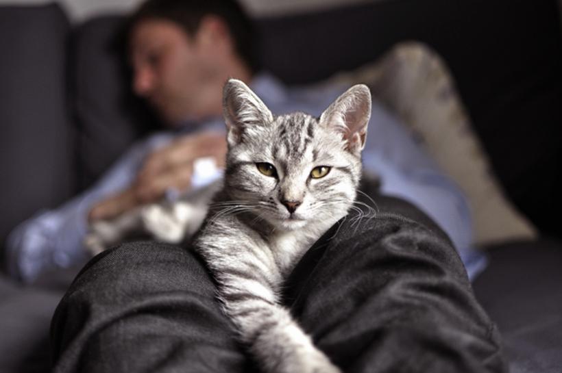 чем может картинки сидящих спящих кошки собраны