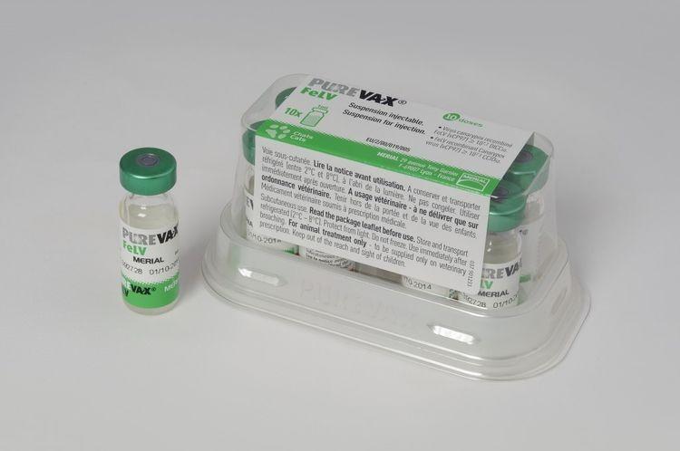 """Вакцина для кошек """"Пуревакс"""": инструкция по применению препарата, механизм действия прививки"""