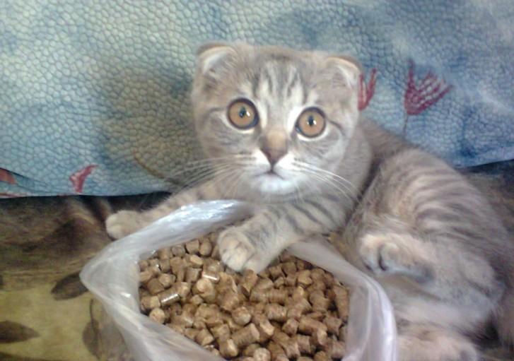 Котенок с наполнителем