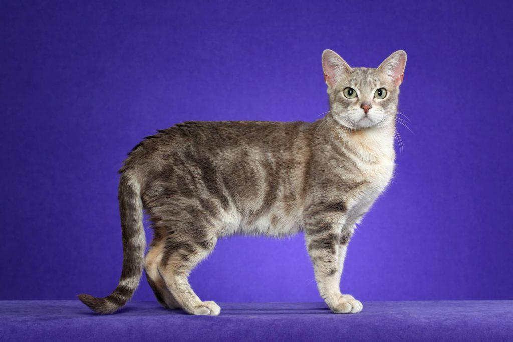 Смотреть картинки кошек и их породу