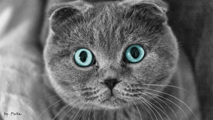 Насыщенный голубой окрас