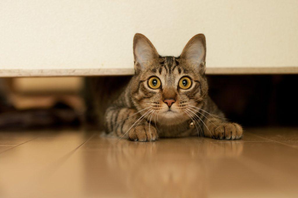 Кот напуган картинки
