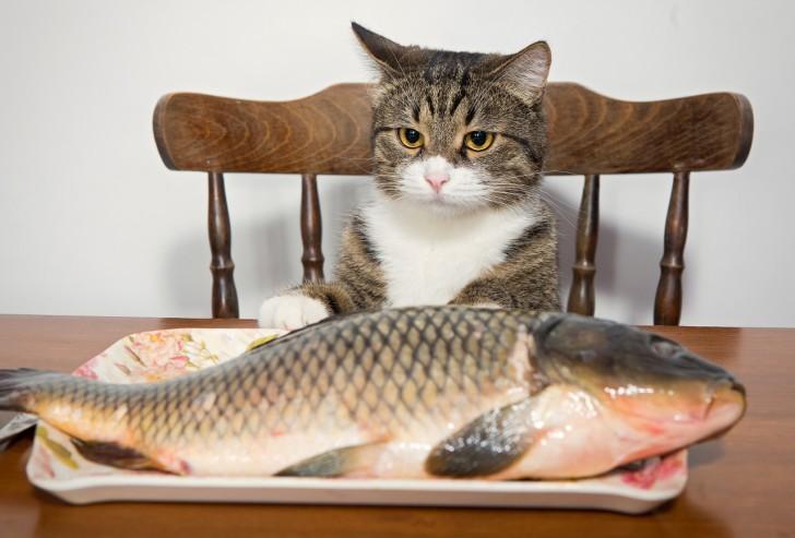 Кот с рыбой