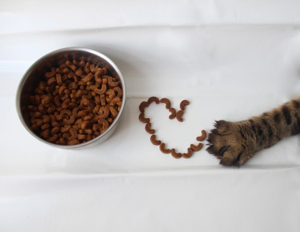 Лучший влажный корм для кошки