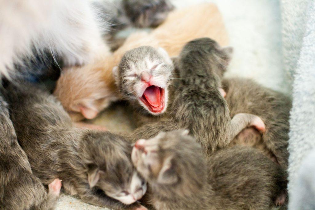 Открытки, картинки с маленькими котятами новорожденными