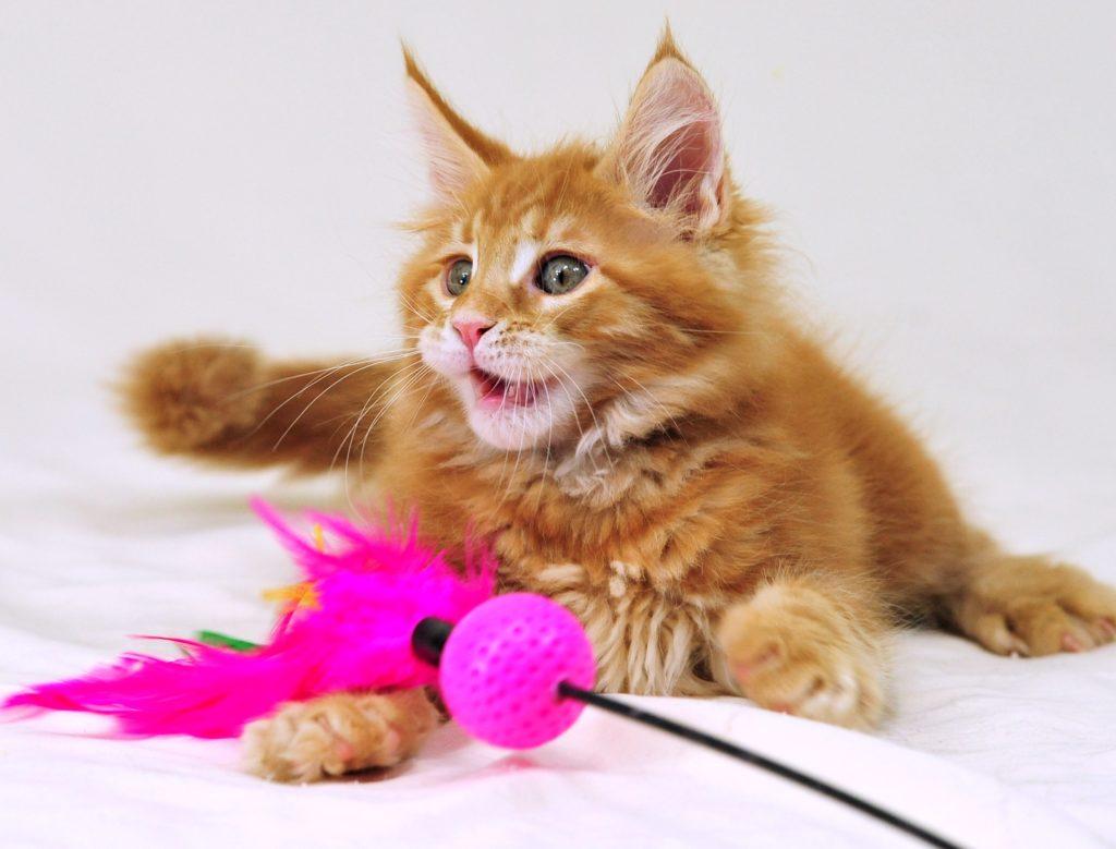 Как научить кошку командам в домашних условиях, каким трюкам можно обучить животное?