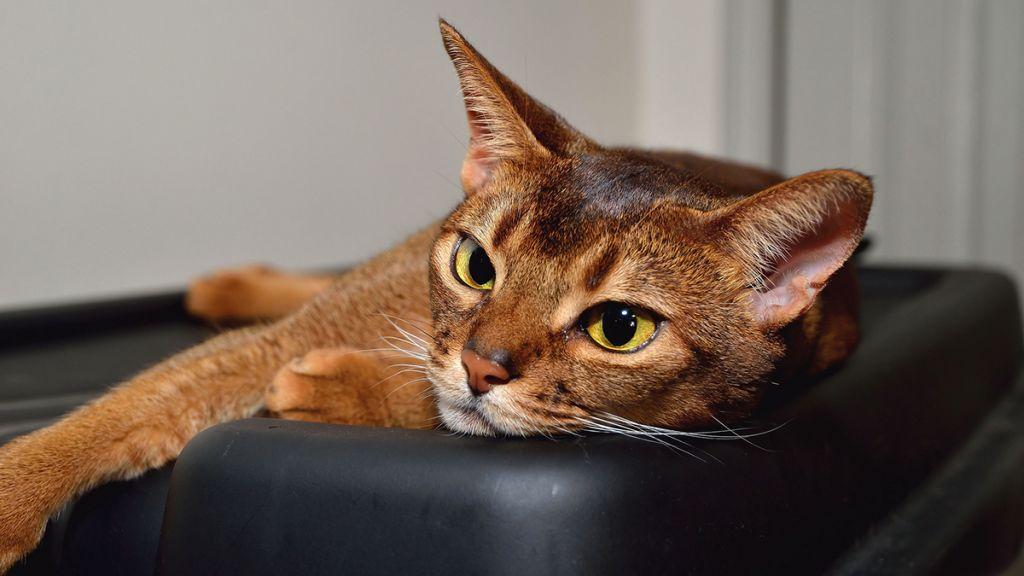 Кот почки лекарство
