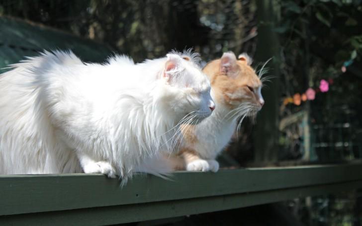Дружба двух керлов