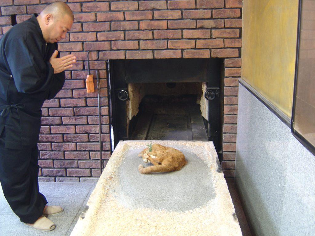 Как умирают кошки от старости симптомы