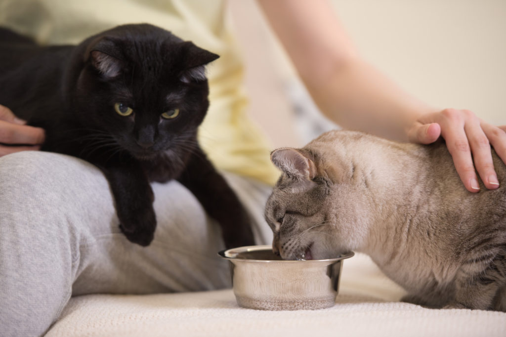 сделать накормите кота картинки показало, что