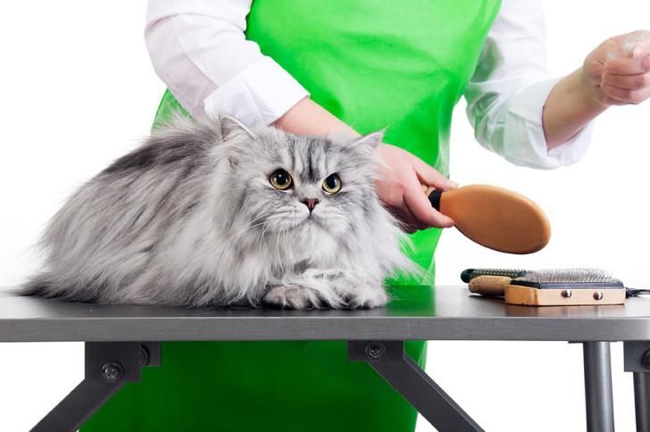 Кошку вычесывают фурминатором