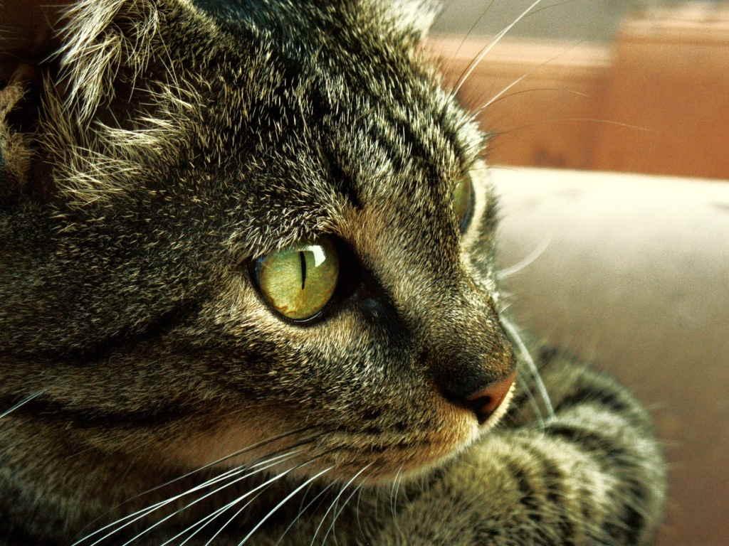 Картинки задумчивые котики, другу