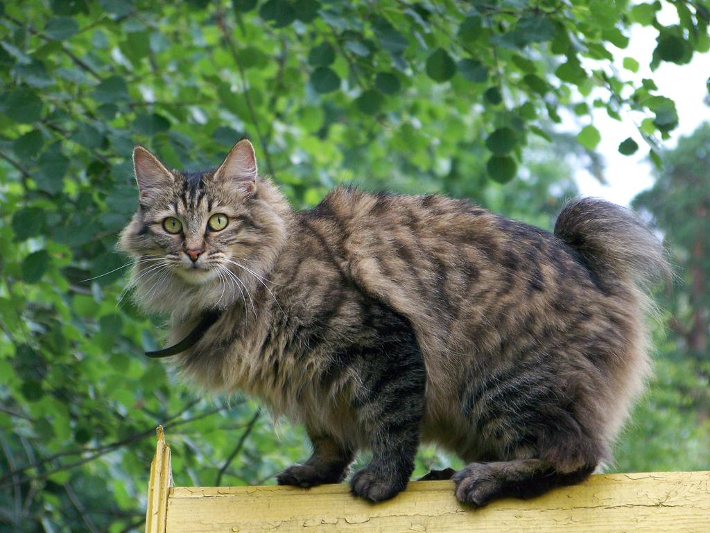 Уличная кошка и домашняя