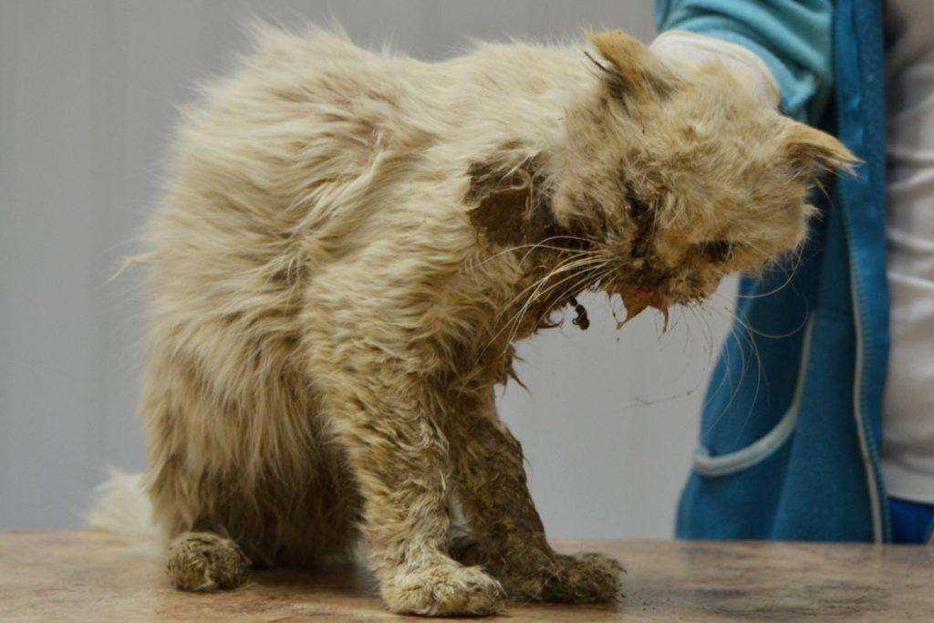 У кошки идут слюни. У кота текут слюни и неприятно пахнет изо рта: причины симптомов и лечение заболеваний
