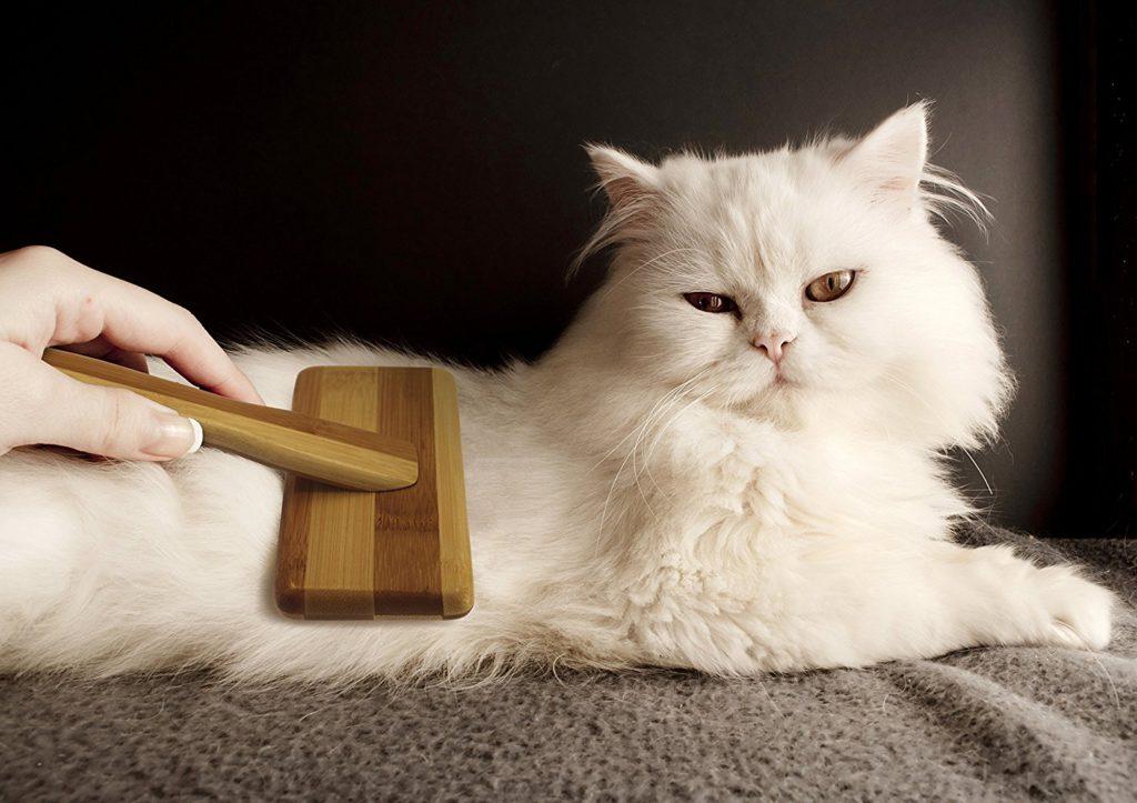 расчесывать кошку картинки течение рабочего дня