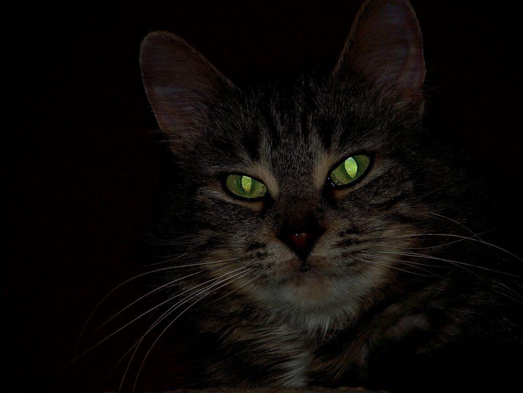 у кошки светятся глаза картинки далеко полный список