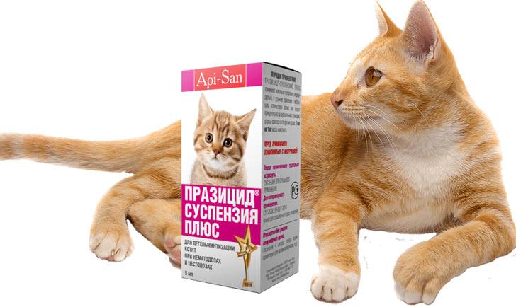 Празицид суспензия плюс для кошек, инструкция по