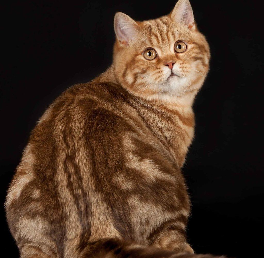 списке фото расцветок кошек определения, насколько вода
