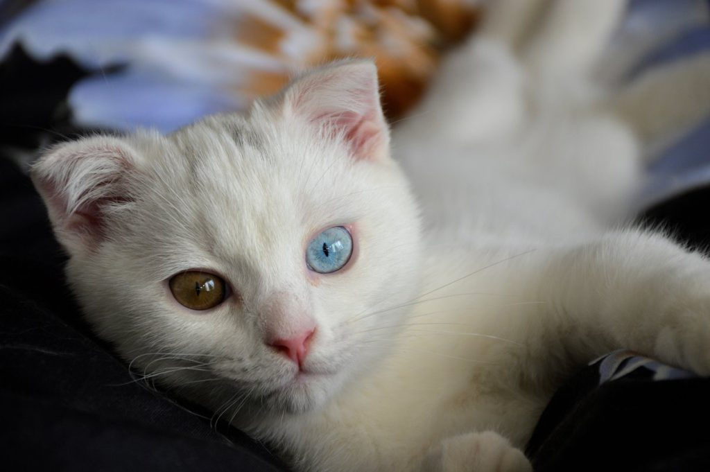 Фото тату кошки на животе выводилась серая