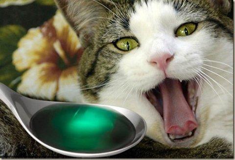 Капли для кошки