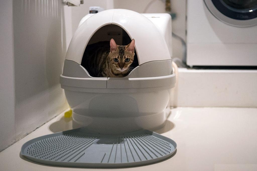 Как приучить кота к лотку — советы и рекомендации