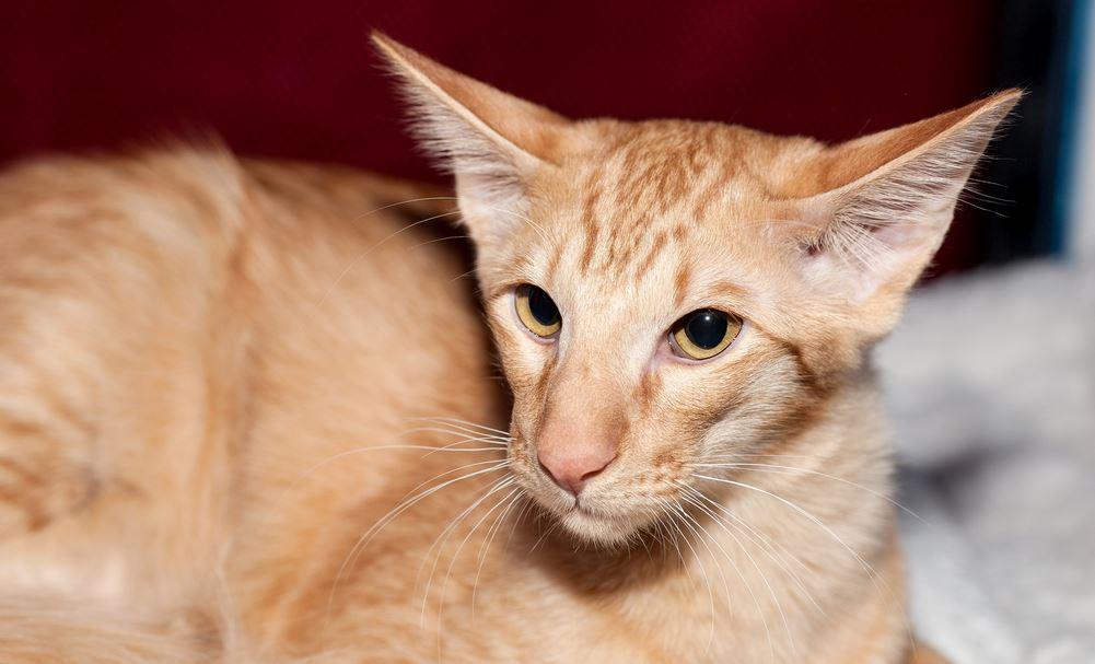Как проявляется аллергия у человека на кошек симптомы и лечение